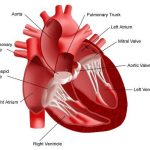 Acquired-heart-disease-causes-symptoms-and-treatment