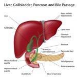 Diseases Concerning Liver